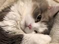 愛猫アーサーの去勢手術