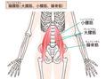 インナーマッスルを鍛えて歪みのない身体へ♪骨盤