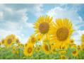夏バテ、紫外線対策の豆知識