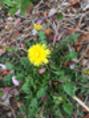 お花の季節 2