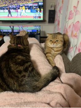 休みの日は猫と一緒に映画鑑賞_20210514_1