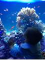 サンシャイン水族館に行ってきました!