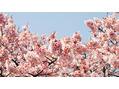 花粉と頭皮の関係