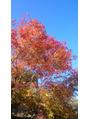 秋の夕日に~照る山もみじ~♪