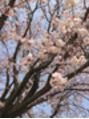 ★4月のイベント★