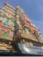 インドへ行ってまいりました^ - ^