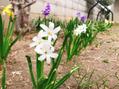 お庭にお花がちらほら