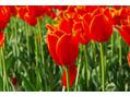 春風によるほこり・肌の汚れにご用心!