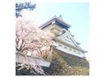 御縁の春 ♪(o^^o)