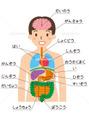 慢性的な肩こり・腰痛・頭痛の原因は内臓疲労