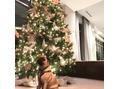 ★クリスマスツリー★