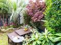 ガーデンのトキワマンサク花盛り♪