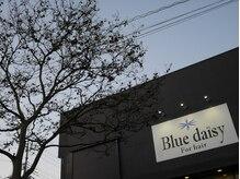Blue daisy For hair