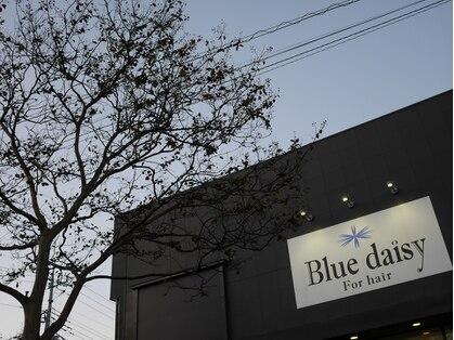 Blue daisy For hair【ブルーデイジーフォーヘアー】