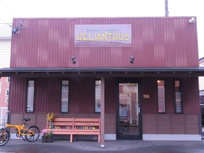 エリアントス(HELIANTHUS)の写真