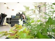 フェデルタ(Fedelta)の雰囲気(植物に囲まれ落ち着いた雰囲気にしています。)
