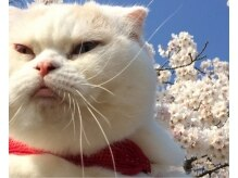 ジョリ(Joli)の雰囲気( ☆ ネコ派 大歓迎です ☆)