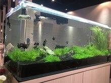 グラス(GLASS)の雰囲気(待合スペースには120cmの優雅な大型水槽が皆さんをお出迎え♪)