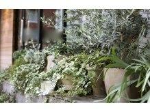 ガーランド (Garland)の雰囲気(お店の外や中にはかわいい植物たちがいっぱいです♪)