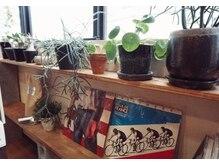 フェリシータ 天神橋店(felicita)の雰囲気(こだわりの植物や小物にかこまれたカフェのような空間です♪)