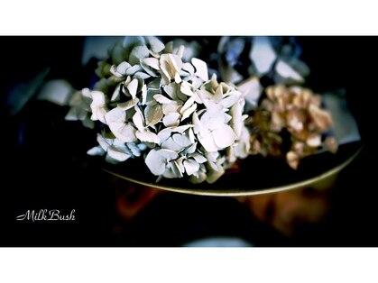 ミルクブッシュ(MILK BUSH)の写真