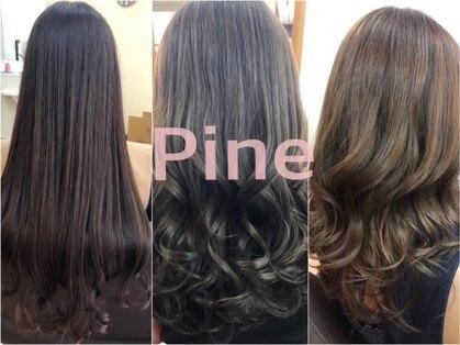 パイン(Pine)の写真