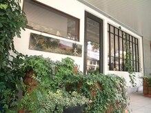 モク 京都北白川店(MOK)の雰囲気(スタッフが大切に大切に世話してる緑たちです。)