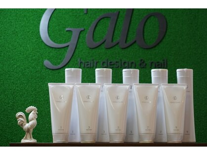 ガロ(galo)の写真