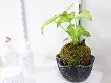 ヘア アンド スパ ミノルキ(hair and spa MInoruKI)の雰囲気(植物のインテリアに溢れた店内。リラックス効果抜群です♪)