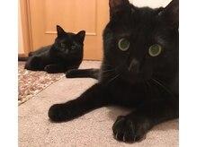ミネット(Minette)の雰囲気(猫好きが集まるサロン☆(店内には猫はいません) )