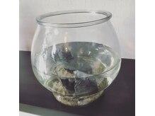 ロキット(ROKIT)の雰囲気(お魚は、、、今は諸事情で、、いません、、、、)