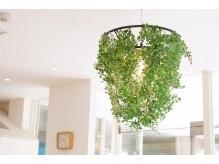 ヘア コレクションの雰囲気(ガーデン&グリーンは季節によって変わります。)
