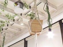 ミックス ヘアーデザイン(Mics hair design)の雰囲気(天井の植物にもこだわってます。)