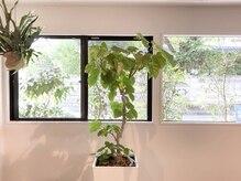 ソーイ ヘアー(soi hair)の雰囲気(植物に囲まれた、クリーンな空間です。)