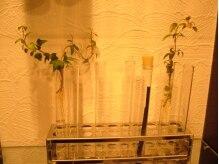 ヘアースペース オップス(Hair Space CO OPUS)の雰囲気(店内にはいたるところに観葉植物が…☆癒されます。)