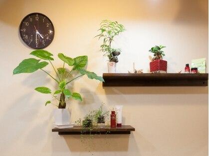 美容室 サラサ(Salasa)の写真