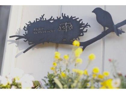 アシャ ヘアー ソリューション 神戸店(asha hair solution)の写真