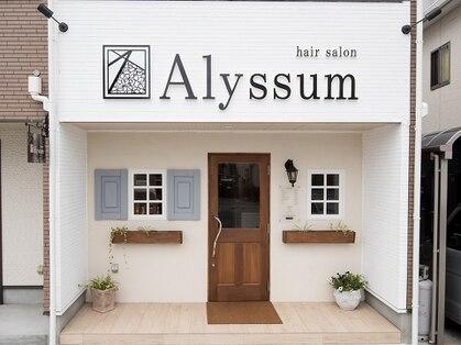 アリッサム(Alyssum)の写真