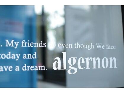 アルジャーノン(algernon)の写真