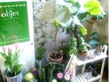 オブジェ (objet)の雰囲気(【入口★】可愛いプチガーデニング♪渋谷と思えない癒し空間です)