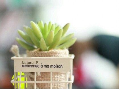ナチュラルピー 真上店(Natural.P)の写真