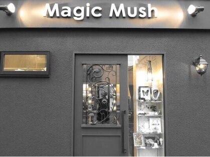 マジックマッシュ Magic Mush 画像