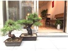 ワワ ヘアサロン 高円寺店(WAWA HAIR SALON)の雰囲気(お店前には和の象徴盆栽でお客様をお出迎え致します【高円寺】)