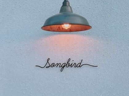 ソングバード(SONG BIRD)の写真
