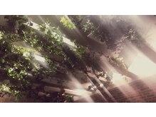 レベッカ(REBECCA by CURACION)の雰囲気(まるで本物の森の中にいるような空間で癒しのヘッドスパを♪)