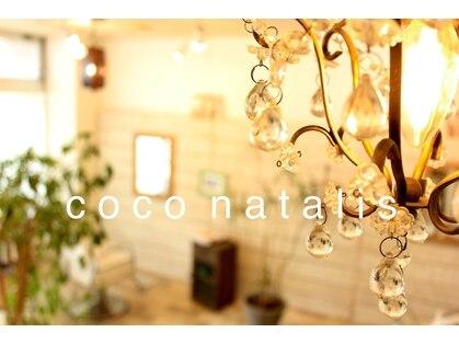 ココ ナタリス(coco natalis)の写真
