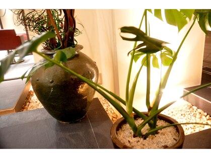 アフィックリマ(afic lima)の写真