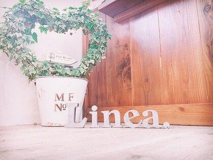 リネア(Linea.)の写真