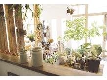 ボタニカ(Botanica)の雰囲気(ちょっと変わった植物も取り扱っています。)