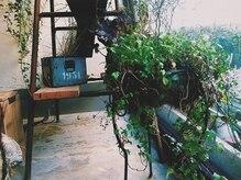 ヘアメイク コモレビ(hairmake komorebi)の雰囲気(店内は植物でいっぱいです☆)